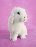 Het konijn van de paashaas Stock Foto