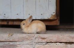 Het konijn van het babykonijntje Royalty-vrije Stock Afbeelding