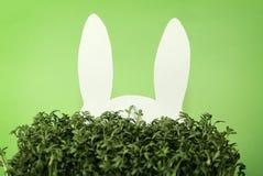 Het konijn van het document dat in groen gras wordt verborgen Royalty-vrije Stock Afbeeldingen