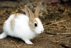 Het Konijn van het konijntje Royalty-vrije Stock Foto's
