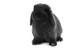 Het konijn van het konijntje stock fotografie