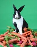 Het Konijn van het konijntje op Stapel van Groenten Stock Fotografie