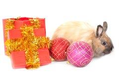 Het konijn van het nieuw-jaar Royalty-vrije Stock Afbeeldingen