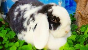 Het konijn van Nana stock afbeeldingen