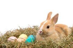 Het konijn van Pasen royalty-vrije stock afbeelding