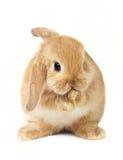 Het konijn van Pasen royalty-vrije stock afbeeldingen