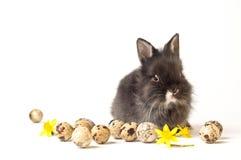 Het konijn van Pasen Stock Foto