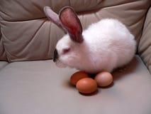 Het konijn van Pasen Royalty-vrije Stock Foto