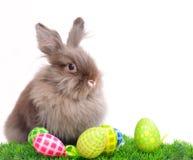 Het Konijn van Pasen met eieren Royalty-vrije Stock Foto
