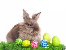 Het Konijn van Pasen met eieren Stock Foto's