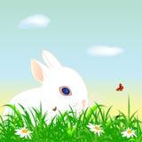 Het konijn van Pasen op een weide Stock Afbeeldingen
