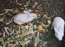 Het konijnenverhaal stock foto