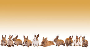 Het konijngrens van de paashaas Royalty-vrije Stock Afbeelding