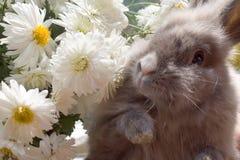 Het konijntje onder de dahlia bloeit close-up Stock Foto