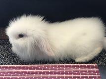 Het konijntje van de baby royalty-vrije stock afbeeldingen