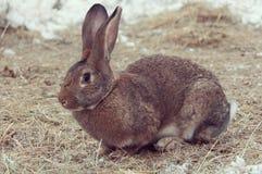Het konijntje zit op het hooi Royalty-vrije Stock Afbeeldingen