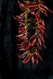 Het koord van peperspaanse pepers tegen zwarte achtergrond royalty-vrije stock foto's