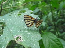 Het koppelen paar vlinders Royalty-vrije Stock Foto