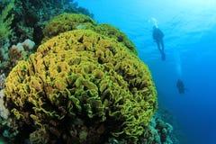 Het Koraal en de Scuba-duikers van de kool royalty-vrije stock foto's