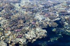 Het koraalrif is zichtbaar door het duidelijke blauwe water Mooie blauwe van de overzeese dichte omhooggaand golffoto Strandvakan stock foto's