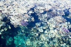Het koraalrif is zichtbaar door het duidelijke blauwe water Mooie blauwe van de overzeese dichte omhooggaand golffoto Strandvakan stock fotografie