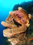 Het koraalspons van het zoutwater stock foto