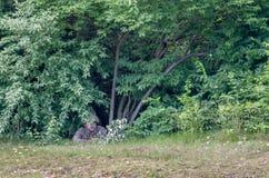Het Koreaanse militair verbergen in de bomen Royalty-vrije Stock Foto