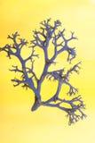 Het Korstmos van de baard als koraal stock afbeeldingen