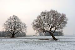 Het koude landschap van de de winterochtend met een weg en een eenzame boom stock foto