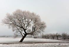 Het koude landschap van de de winterochtend met een weg en een eenzame boom stock fotografie