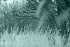 Het koude park van het de herfstlandschap royalty-vrije stock foto's