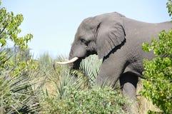 Het krijgen dicht bij het wild op een Nationaal Park van safarikruger royalty-vrije stock afbeelding