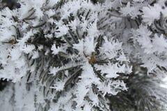 Het kristal van het de winterijs Royalty-vrije Stock Afbeeldingen