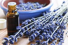 Het kruid van de lavendel en essentiële olie Royalty-vrije Stock Afbeeldingen