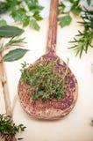 Het kruid van de thyme Stock Afbeeldingen