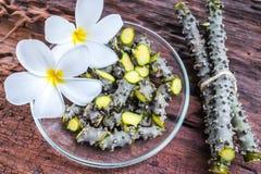 Het kruid van Tinosporacordifolia royalty-vrije stock afbeeldingen