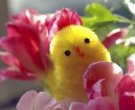 Het kuiken & de lentebloemen van Pasen Royalty-vrije Stock Foto