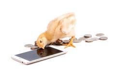 Het kuiken communiceert met smartphones voor geld Royalty-vrije Stock Foto's
