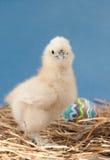 Het kuiken dat van Pasen de kijker bekijkt royalty-vrije stock afbeeldingen