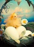 Het kuiken en de eieren van Pasen in mand Stock Afbeelding