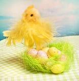 Het kuiken en de eieren van Pasen in nest Royalty-vrije Stock Foto