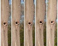 Het kuiken kijkt uit holten stock fotografie