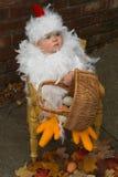 Het Kuiken van de baby Royalty-vrije Stock Afbeeldingen