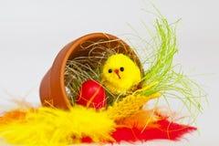 Het kuiken van Pasen Stock Foto