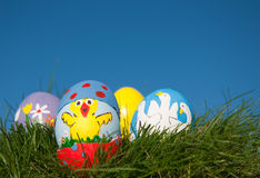 Het kuiken van Pasen dat op eishell wordt geschilderd Stock Afbeeldingen