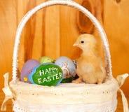 Het kuiken van Pasen in mand met rustieke achtergrond Royalty-vrije Stock Foto