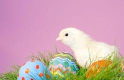 Het kuiken van Pasen met eieren op purpere achtergrond Royalty-vrije Stock Afbeeldingen