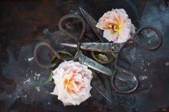 Het kunststilleven met twee oude roestig nam rozen op een donkere achtergrond in het water toe en twee reusachtige tot bloei kome Royalty-vrije Stock Fotografie