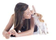 Het kussen chihuahua royalty-vrije stock foto's