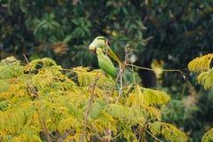 Het kussen op de boom in de regen stock foto's